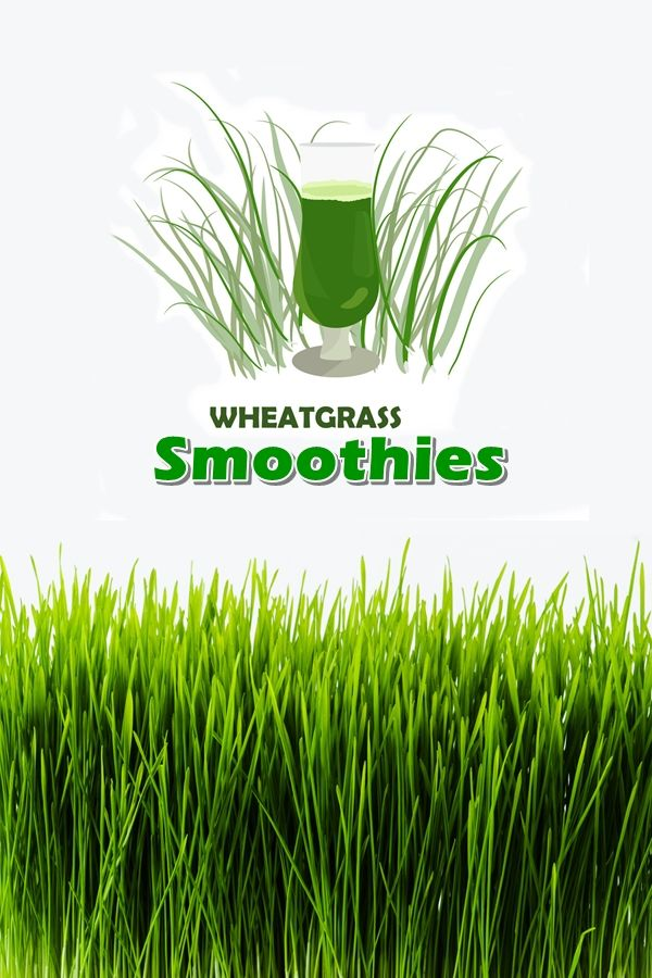 Unlike typical wheat family plants, wheatgrass doesn't contain gluten. Wheatgrass allergies are common, however, and can include digestive upset, skin rashes, respiratory difficulties, and impaired circulation.