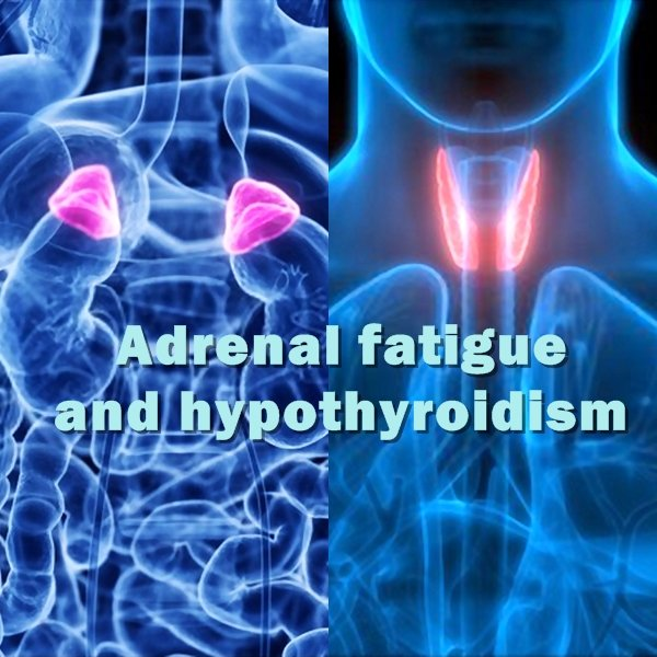There is a significant connection between low adrenal (adrenal insufficiency) and low thyroid (hypothyroidism).